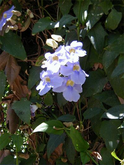 Tsflower